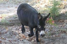 daddy donkey